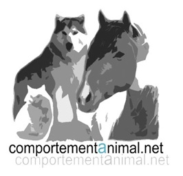 Comportement animal.com